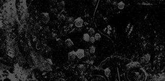 Primitive Man, Noise, Doom, Sludge, Relapse Records, 2018, News, Bandcamp, U.S.A., Streaming,Unearthly Trance,